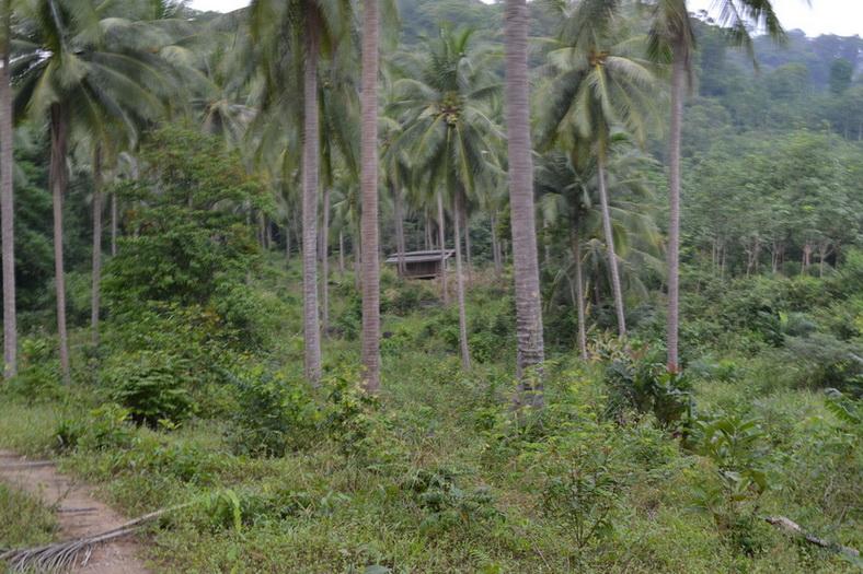 Кханом джунгли