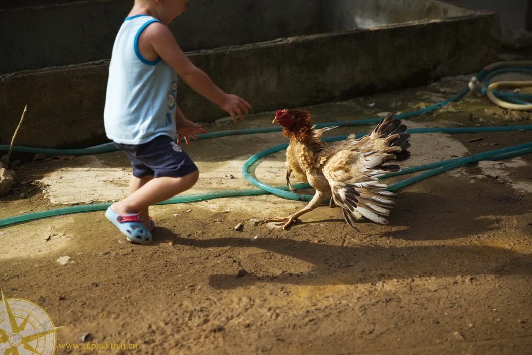 Животные на Ко Ланте