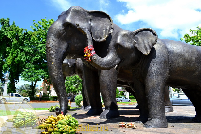 Подношение слонам в Краби Таиланд