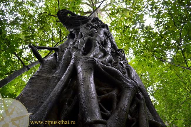 Вековые деревья Краби