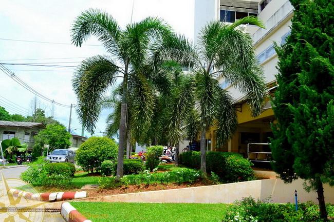 Госпиталь Краби