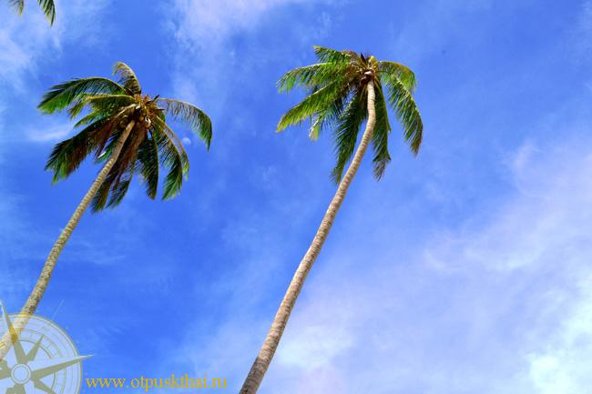 Пальмы Клонг Муанга