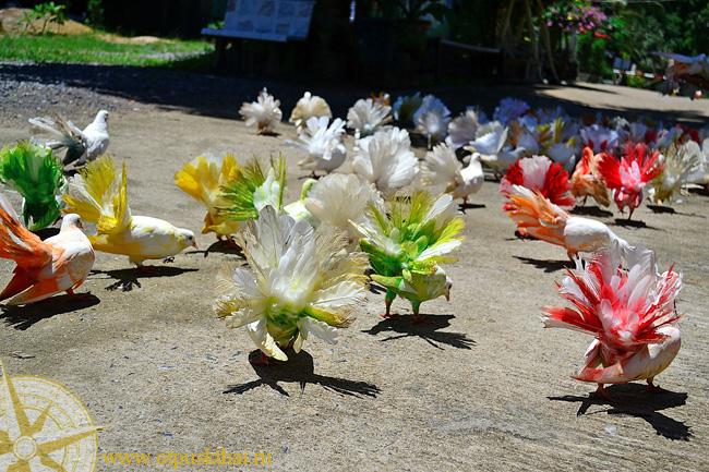 Голуби в paradise park Самуи