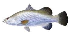 разновидность рыб Таиланда в Као Соке