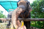 Прогулка на слонах в Краби возле Ао Нанга