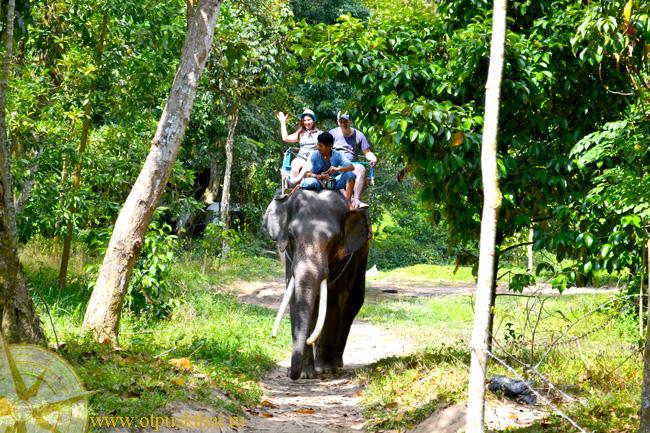 слоны прогулки ао нанг