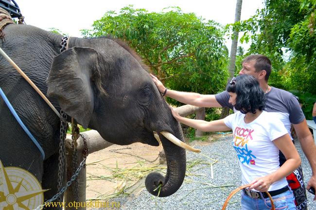 катание слоны краби