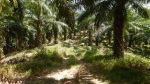 Эндуро по бездорожью Таиланда в Краби